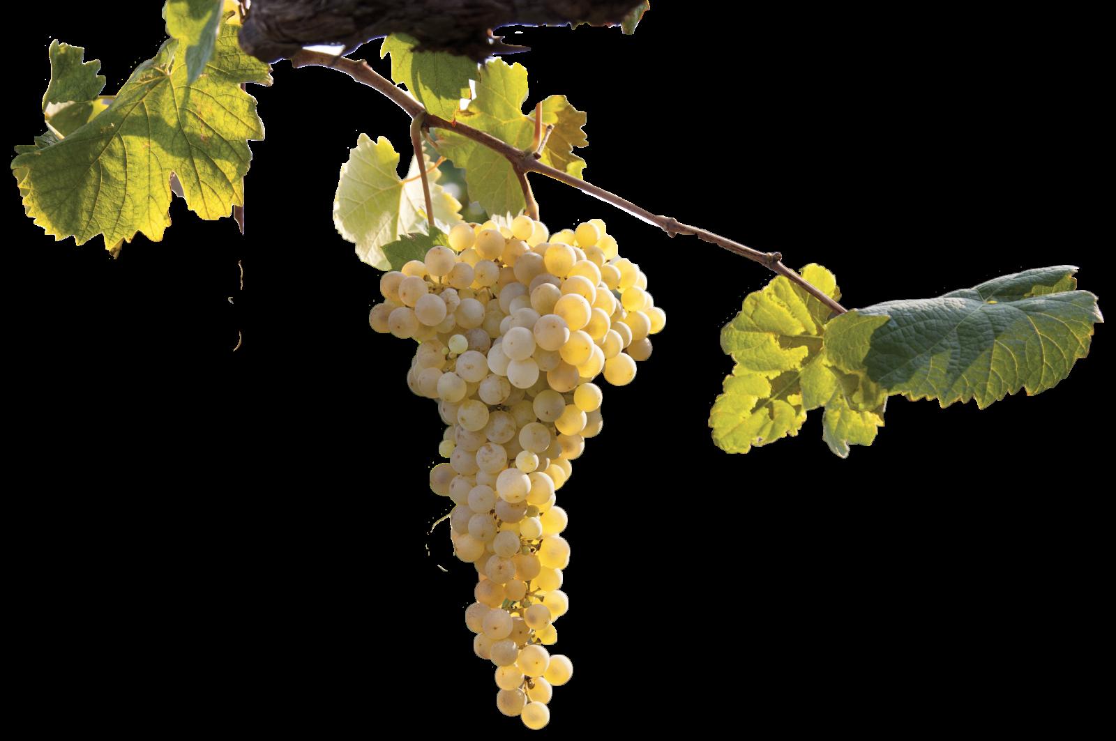 Merotto Wine Club - IMG_7064-2-2