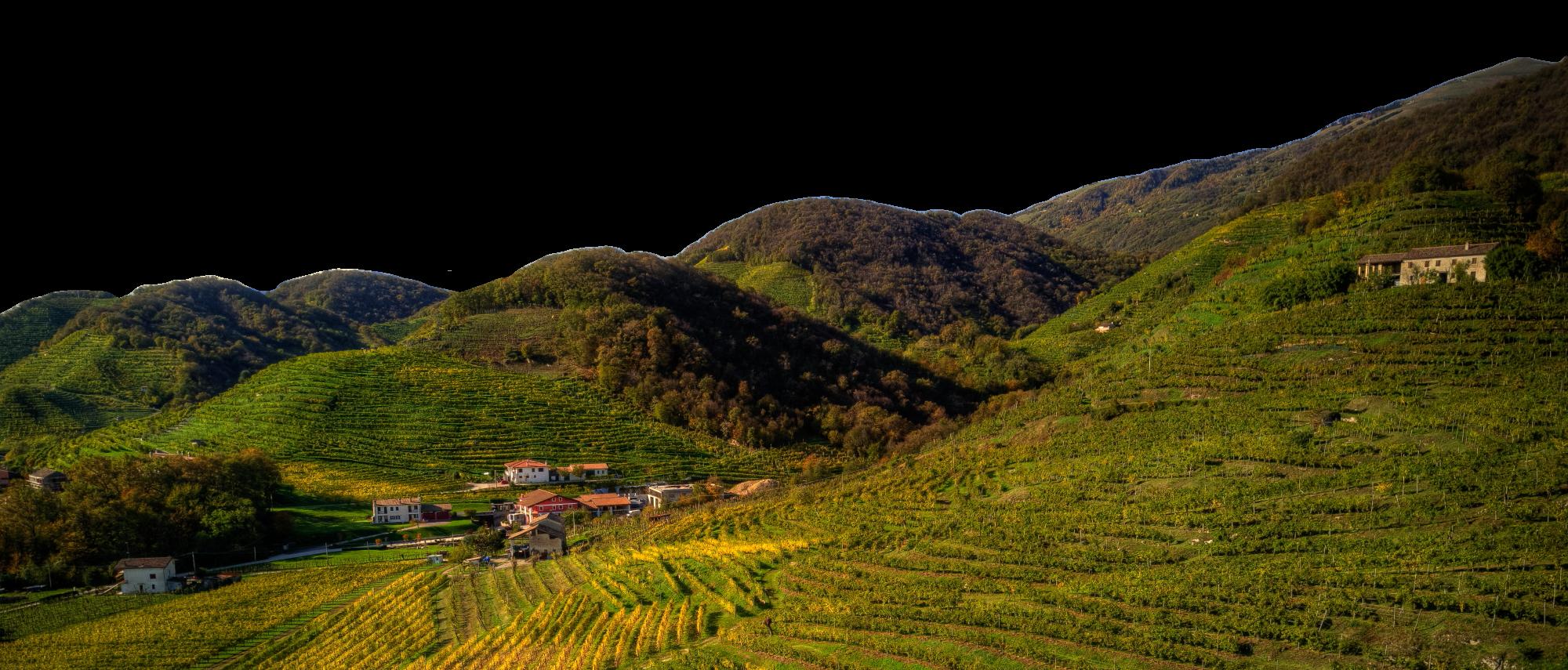 Merotto Wine Club - colline1