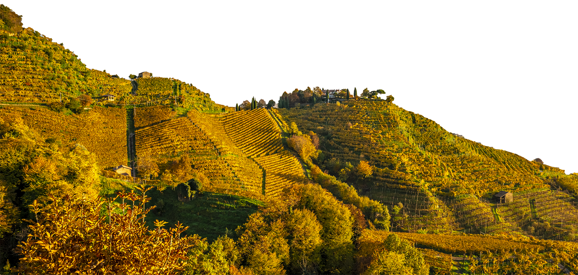 Merotto Wine Club - colline3